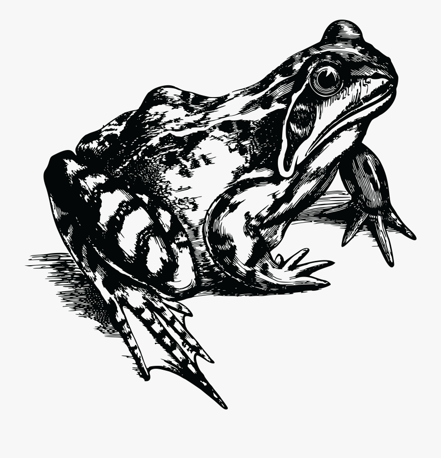 Red Eyed Tree Frog Clipart Black And White.