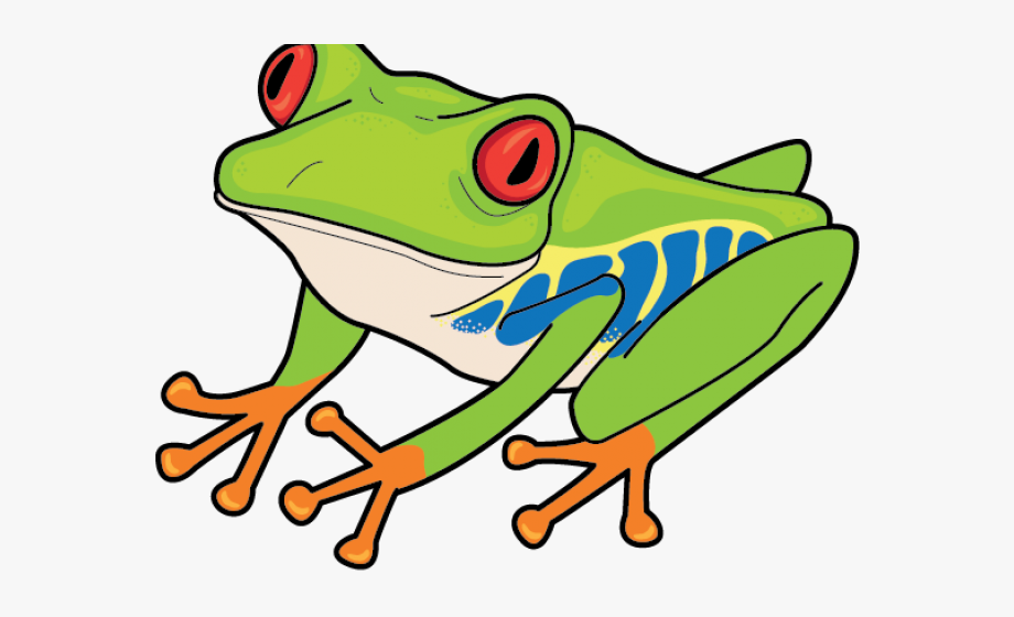 Red Eyed Tree Frog Clipart , Transparent Cartoon, Free.