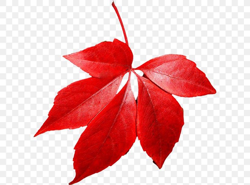 Autumn Leaf Color Clip Art, PNG, 600x606px, Autumn Leaf.