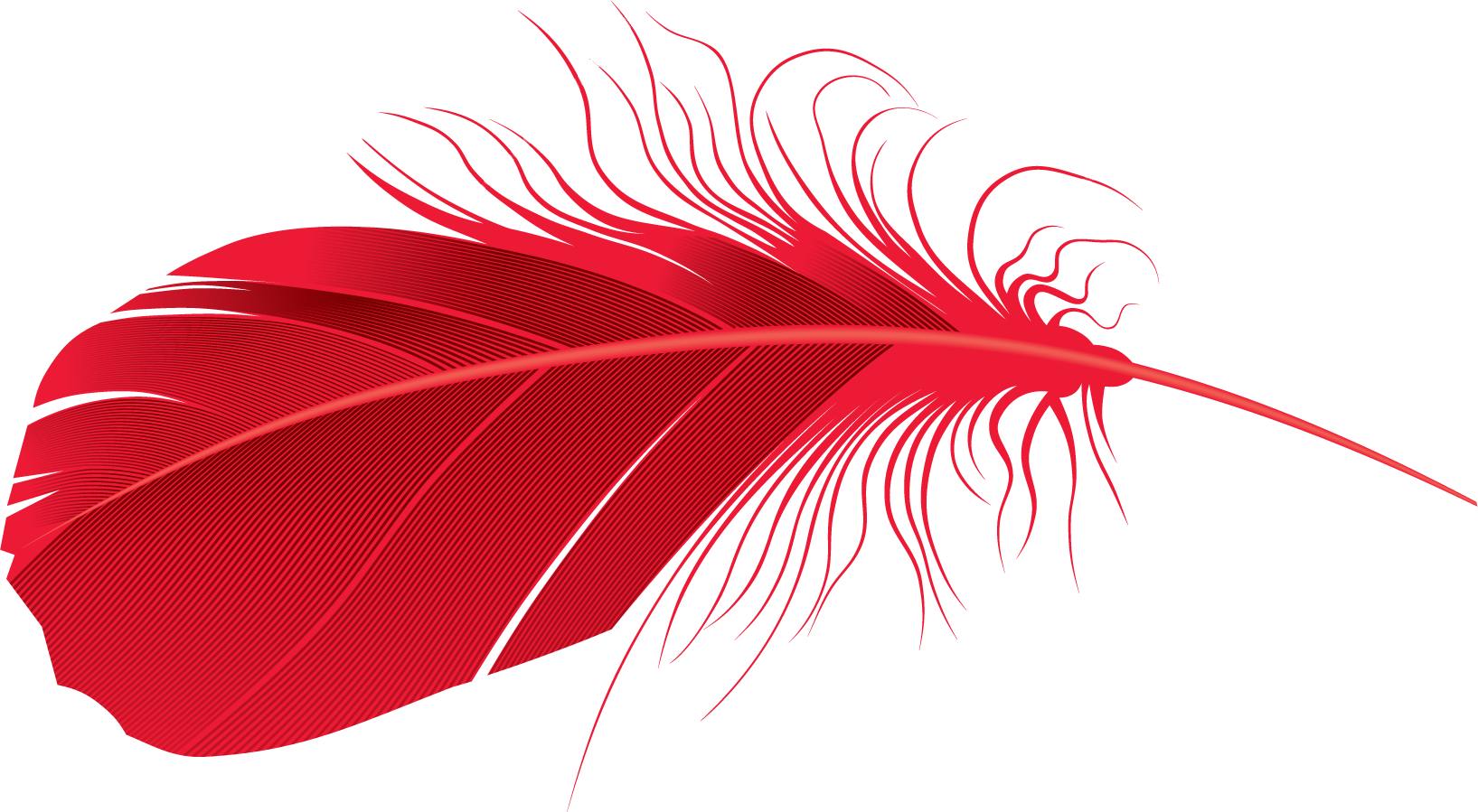 Download red Feather PNG Transparent Image #8.