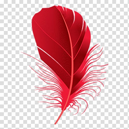 Red feather illustration, Feather Red , Red feathers.