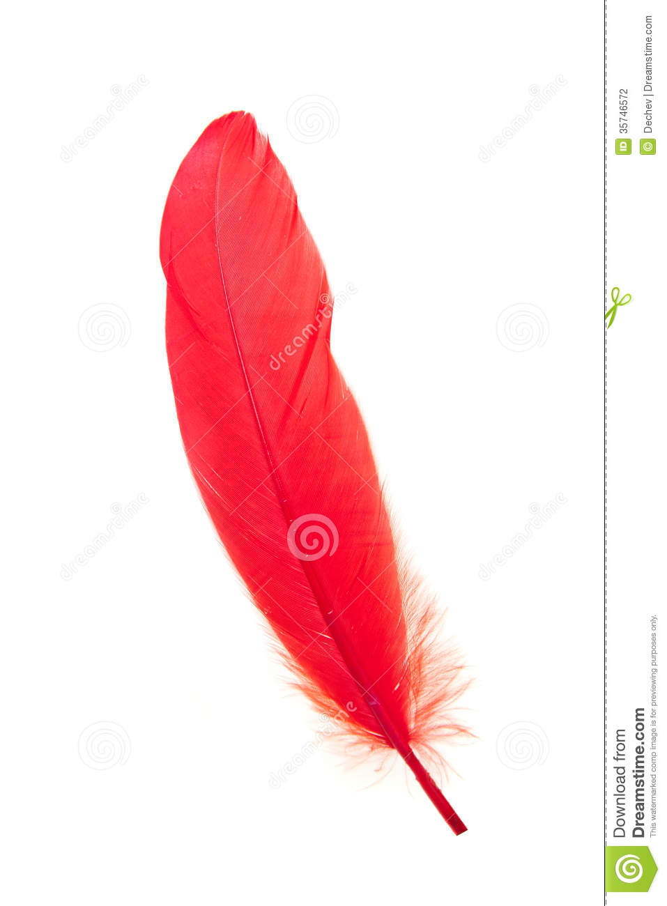 Red Feather Isolated Stock Photography.