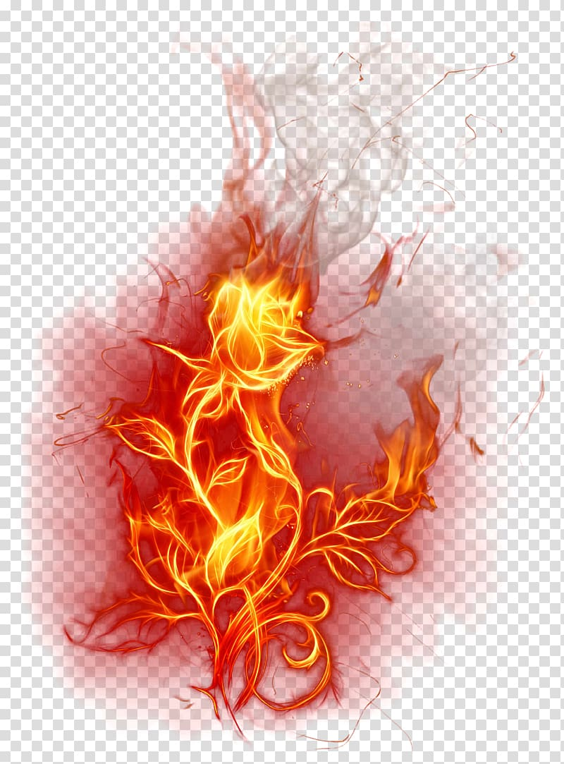 Red fire, Flame Fire Combustion , Burning Rose transparent.