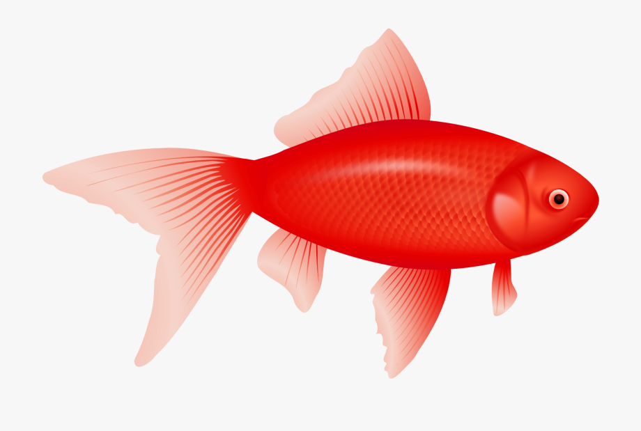 Cute Red Fish Clipart.