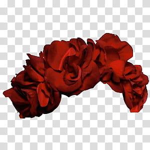 Flower Crowns, red rose flower illustration transparent.