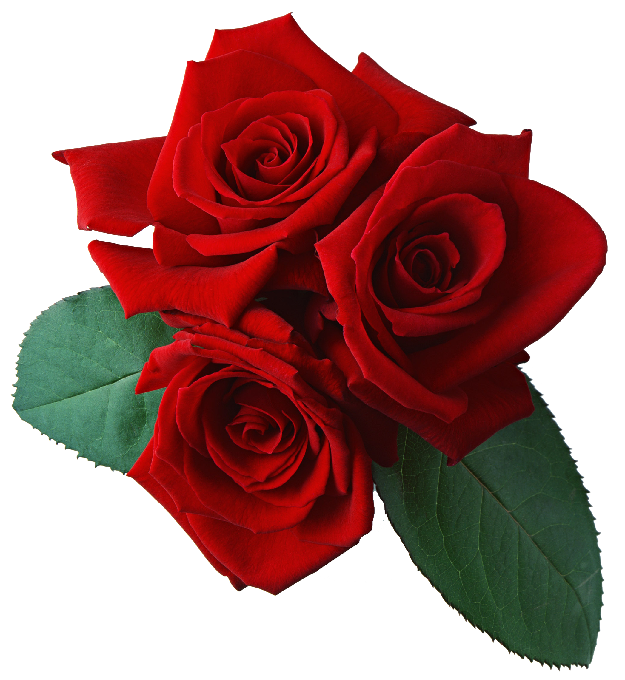 Three Red Rose Png Flower.