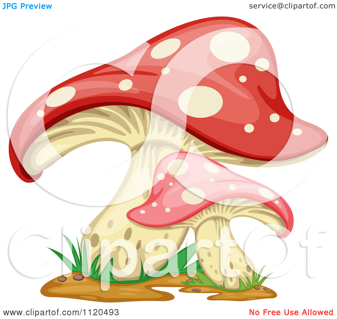 Clipart Of Fly Agaric Mushrooms 1.