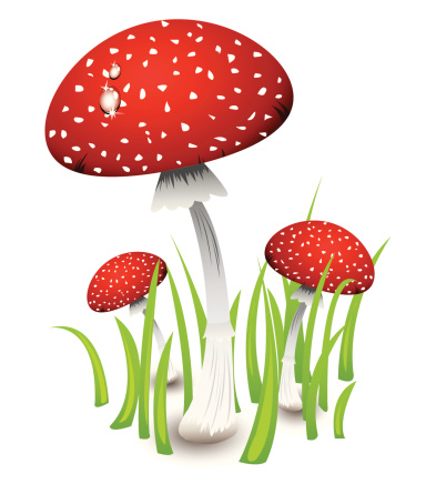 Red Fly Agaric Clip Art, Vector Images & Illustrations.