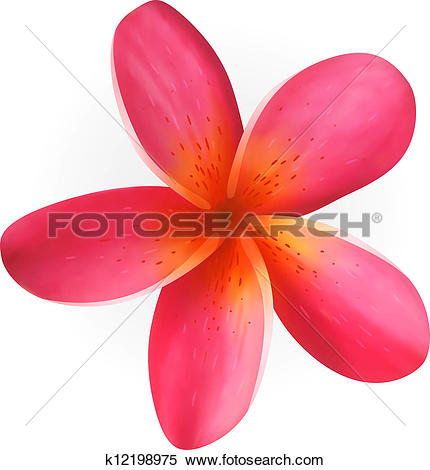 Clipart of Beautiful Frangipani k7970471.