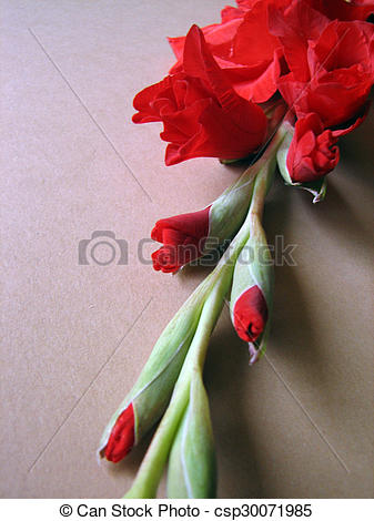 Stock Illustration of red gladiolus flowers on a background.