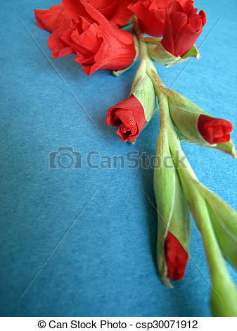 Clipart of red gladiolus flowers on a background csp30071912.