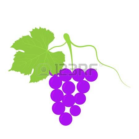 385 Grape Variety Stock Illustrations, Cliparts And Royalty Free.