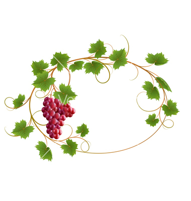 1000+ images about grape vine on Pinterest.