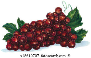 Red grapes Illustrations and Clipart. 1,705 red grapes royalty.