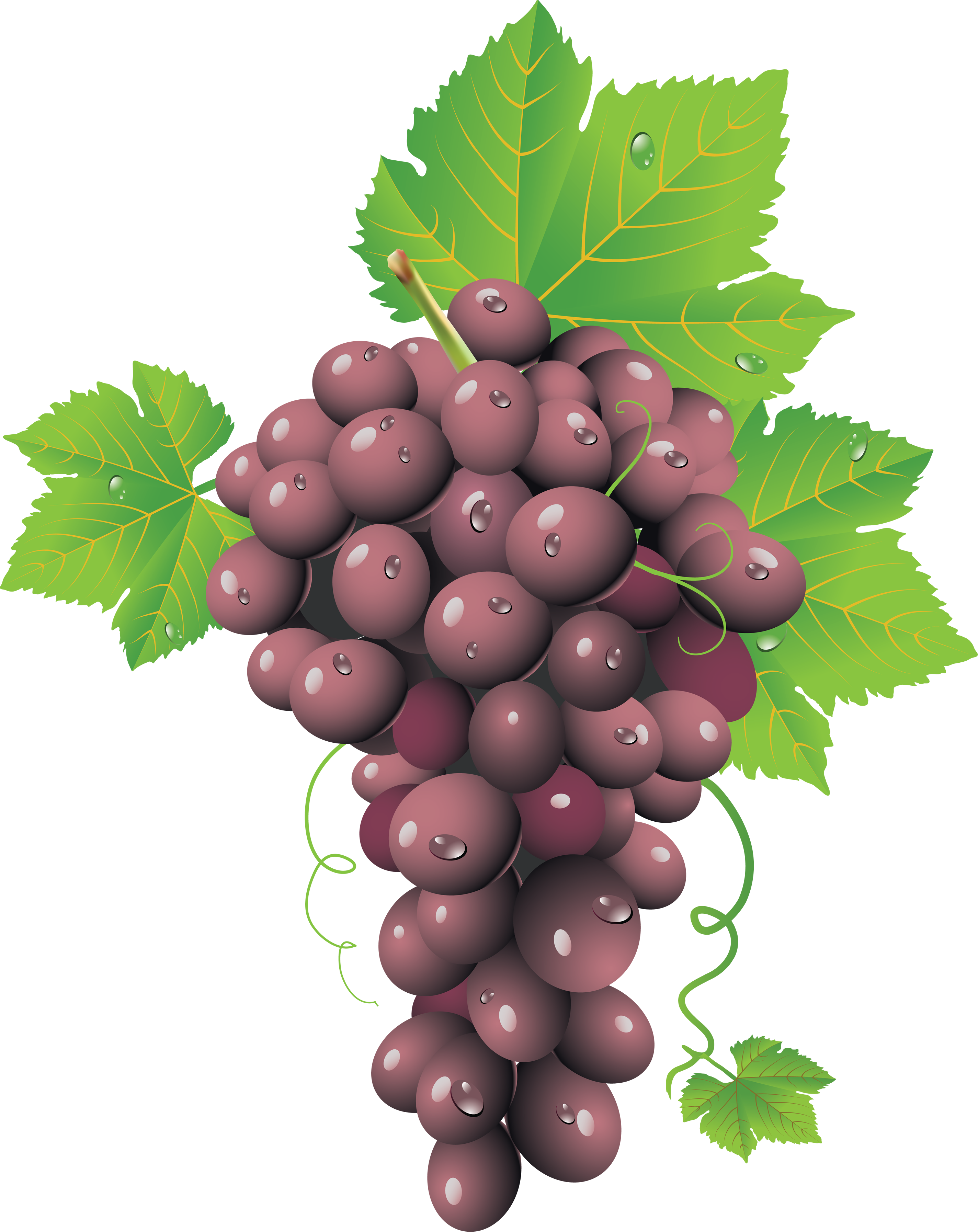 Grape PNG image, free picture download.