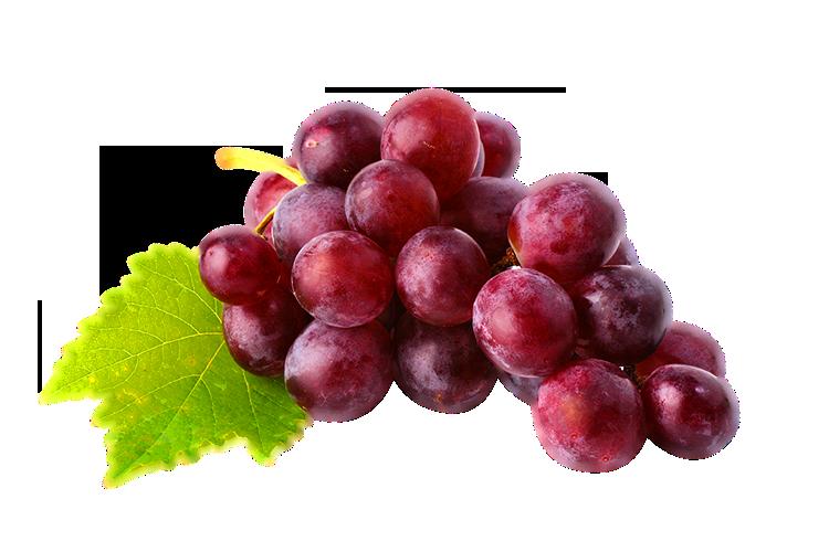Red Wine Juice Common Grape Vine Red Globe.