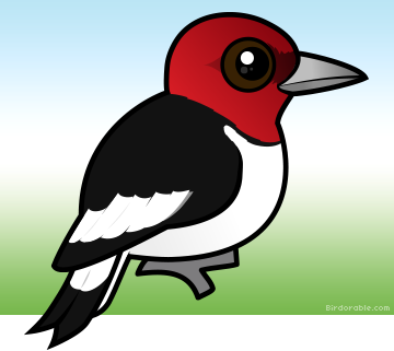 Showing post & media for Red headed woodpecker cartoon.
