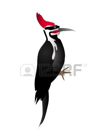 911 Woodpecker Cliparts, Stock Vector And Royalty Free Woodpecker.