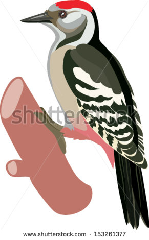 Red Headed Woodpecker Isolated Stock Images, Royalty.