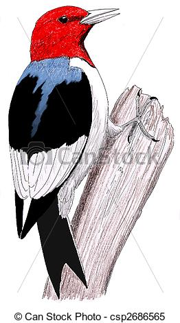 Red Headed Woodpecker Clipart.