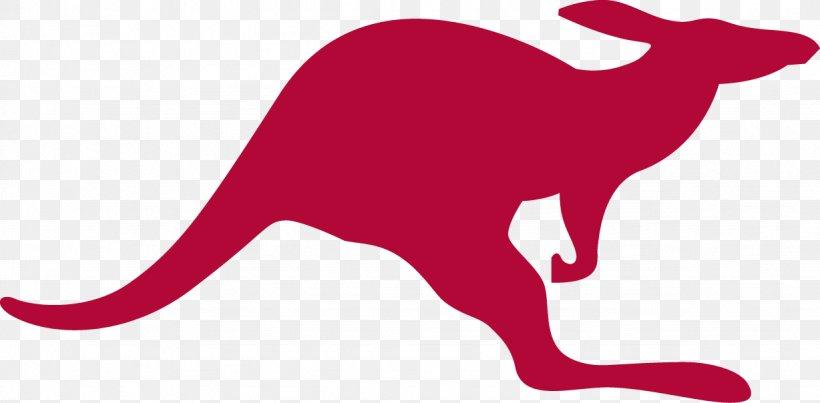 Red Kangaroo Macropodidae Logo Clip Art, PNG, 1228x604px.