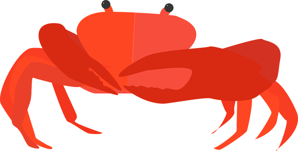 Free vector graphic: Crab, Cancer, Animal, Shellfish.