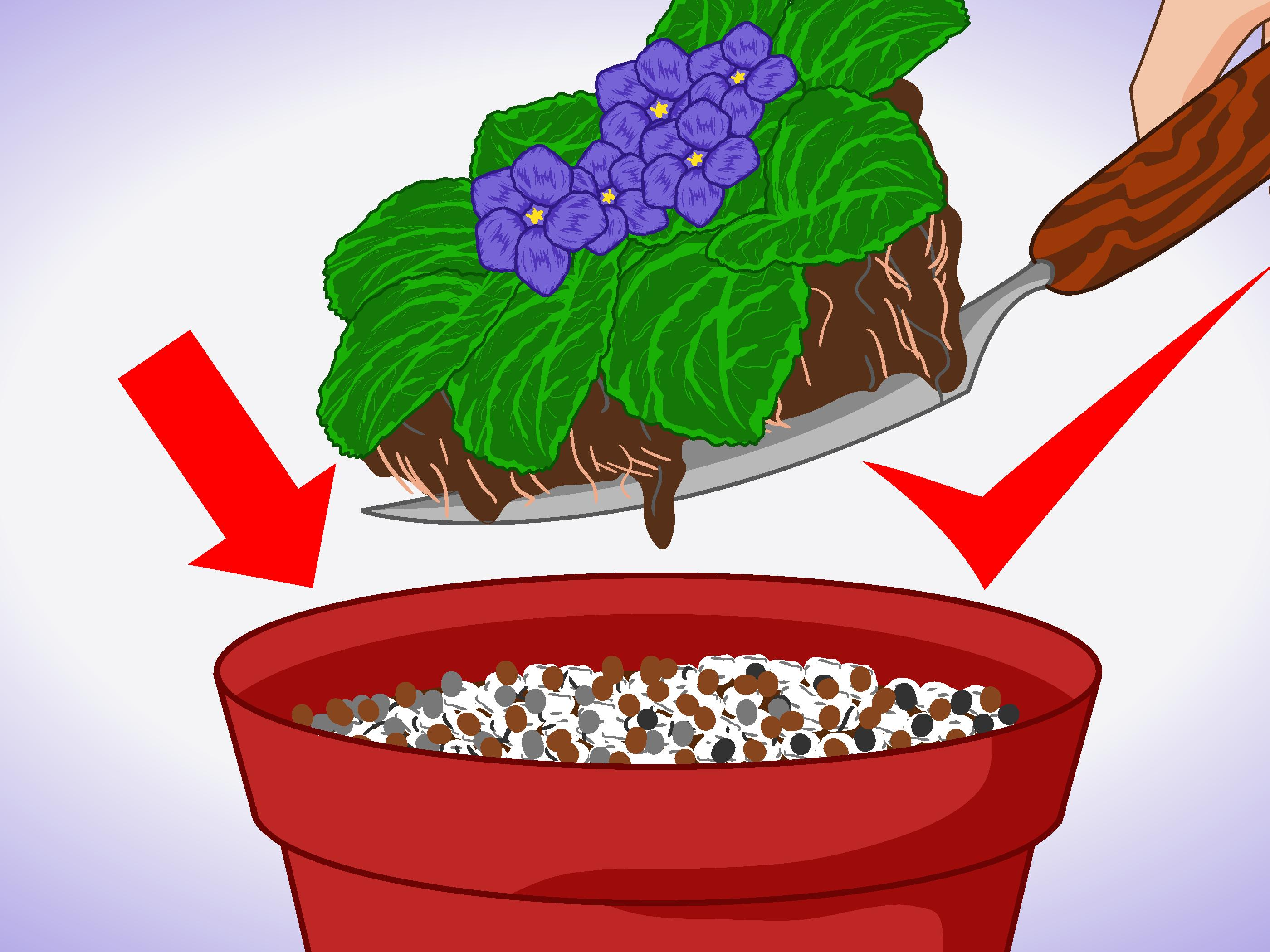 How to Grow African Violets Indoors: 9 Steps (with Pictures).