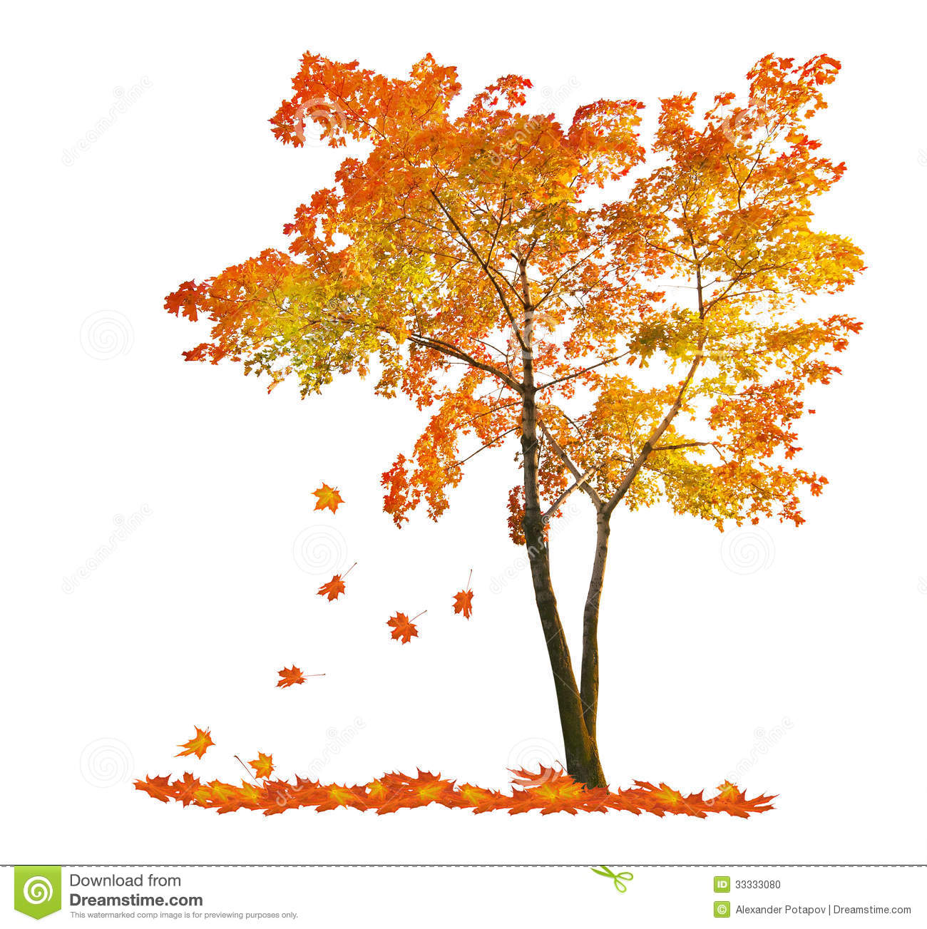 Red Autumn Maple Tree With Falling Leaves Stock Photo.