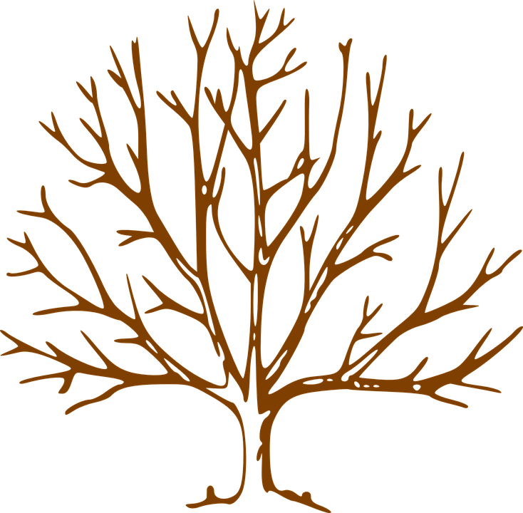 Free vector graphic: Tree, Leafless, Denuded, Nature.