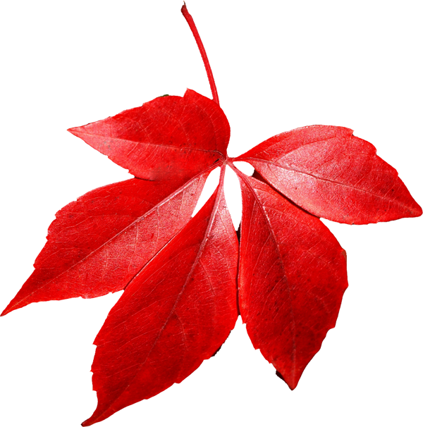 Red leaves clipart - Clipground