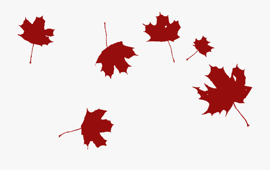 Maple Falling Wind Red Leaves Png Image.