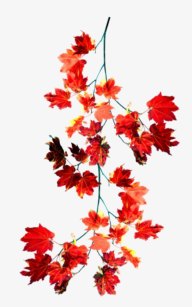 Download Free png Red Leaves, Leaves, Leaf, Branches And.
