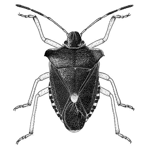 drawings of insects.