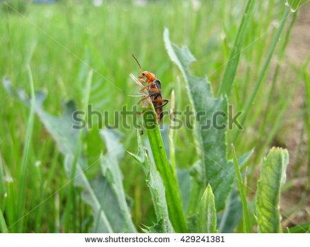 Green Soldier Bug Stock Photos, Royalty.