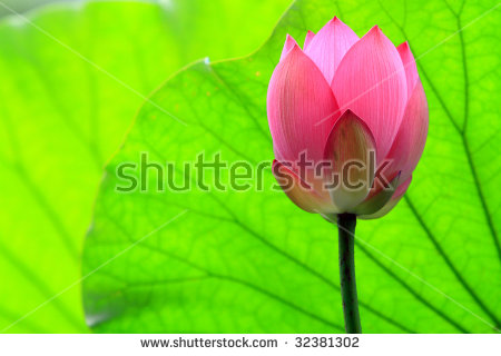 Flower Pods Stock Photos, Images, & Pictures.