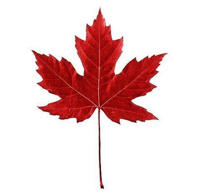 Image Of Maple Leaf.