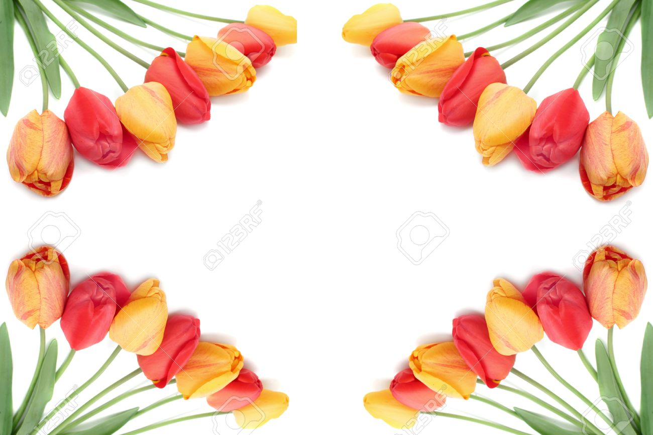 Bouquets Of Red, Orange And Yellow Tulips On A White Background.