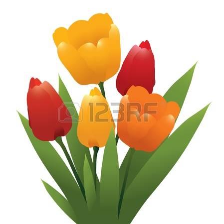 1,558 Orange Tulip Stock Vector Illustration And Royalty Free.