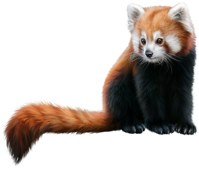 Mammal,Vertebrate,Red panda,Carnivore,Whiskers,Tail,Cat.