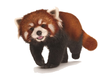 Red Panda PNG Transparent Red Panda.PNG Images..