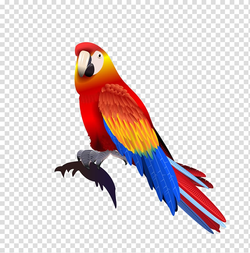 Red, blue, and yellow macaw illustration, Parrot Macaw.