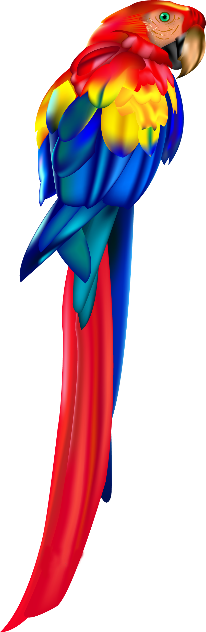 Red Parrot Png Clipart.