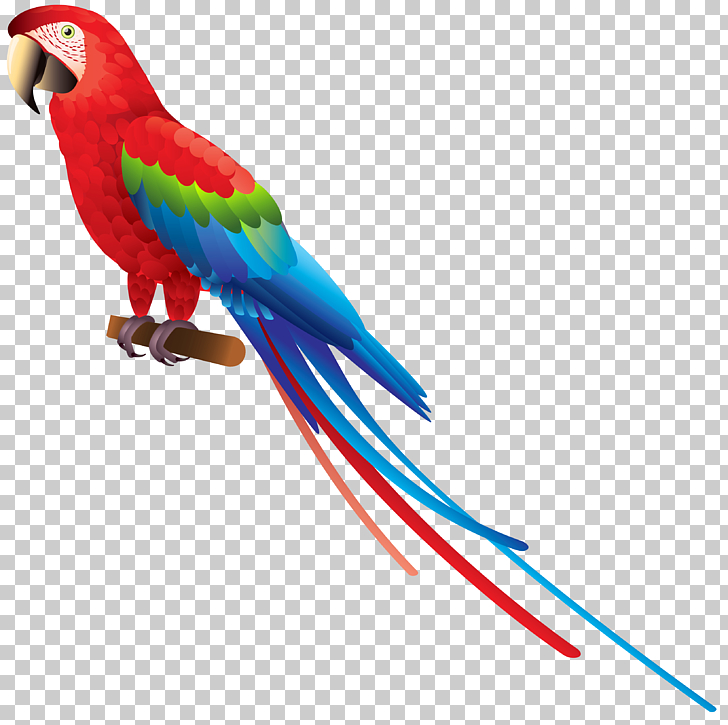 Bird True parrot Amazon parrot , Parrot , red macaw.