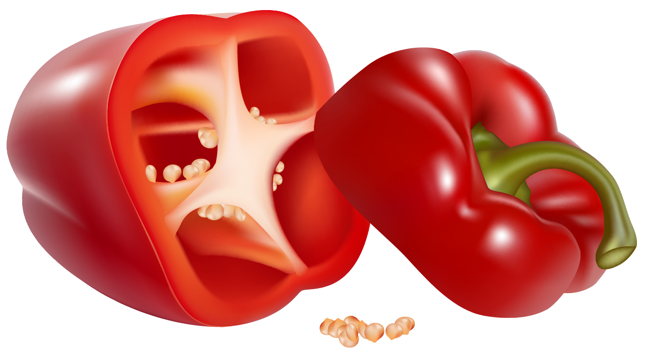 Red Pepper PNG Clipart Picture.