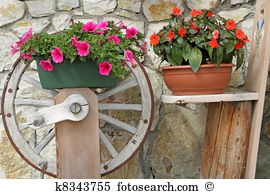 Petunia Stock Photo Images. 4,489 petunia royalty free images and.