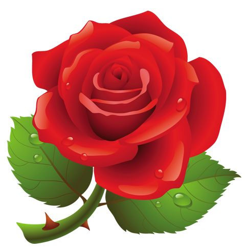 Red Rose PNG Art Picture.