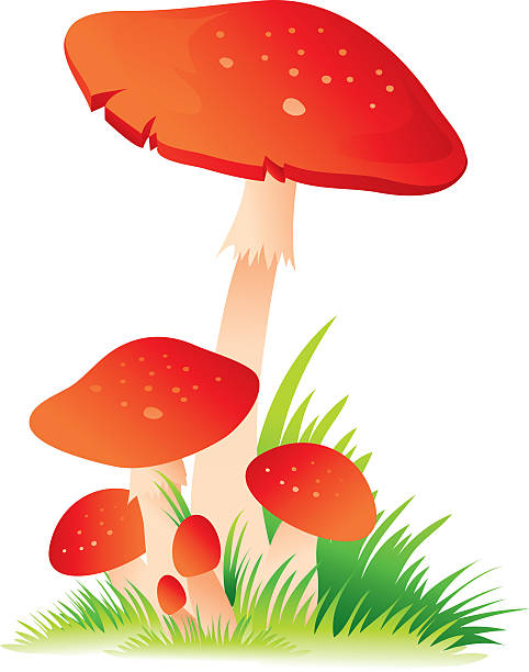 Background Of The Red Poisonous Mushrooms Clip Art, Vector Images.