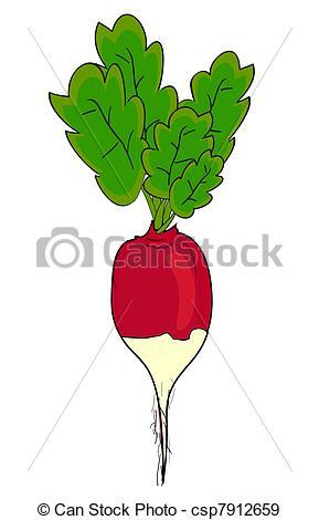 Radish Stock Illustrations. 3,794 Radish clip art images and.