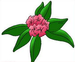 Rhododendron Clipart.