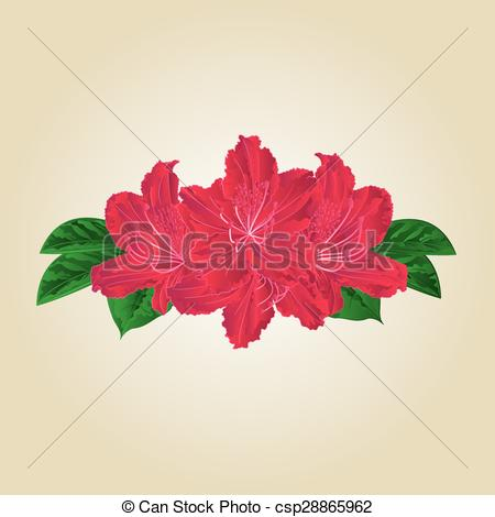 Clip Art Vector of Bouquet of red rhododendrons vector.eps.